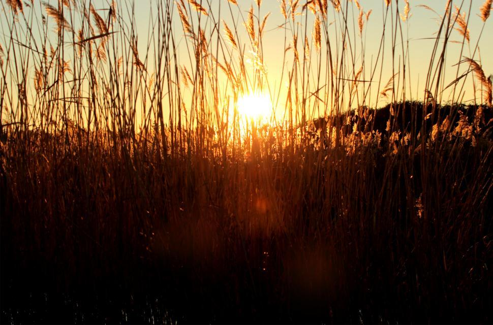 Download Free Stock HD Photo of Sunset through grass Online