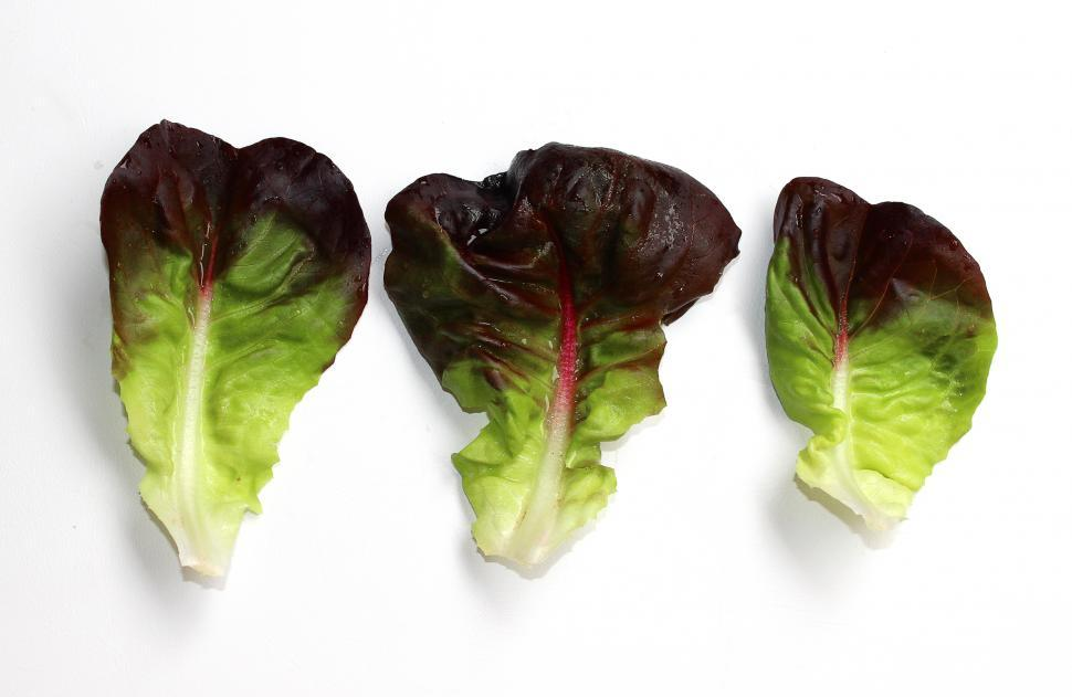 Download Free Stock HD Photo of Red lettuce leaves isolated on white background Online