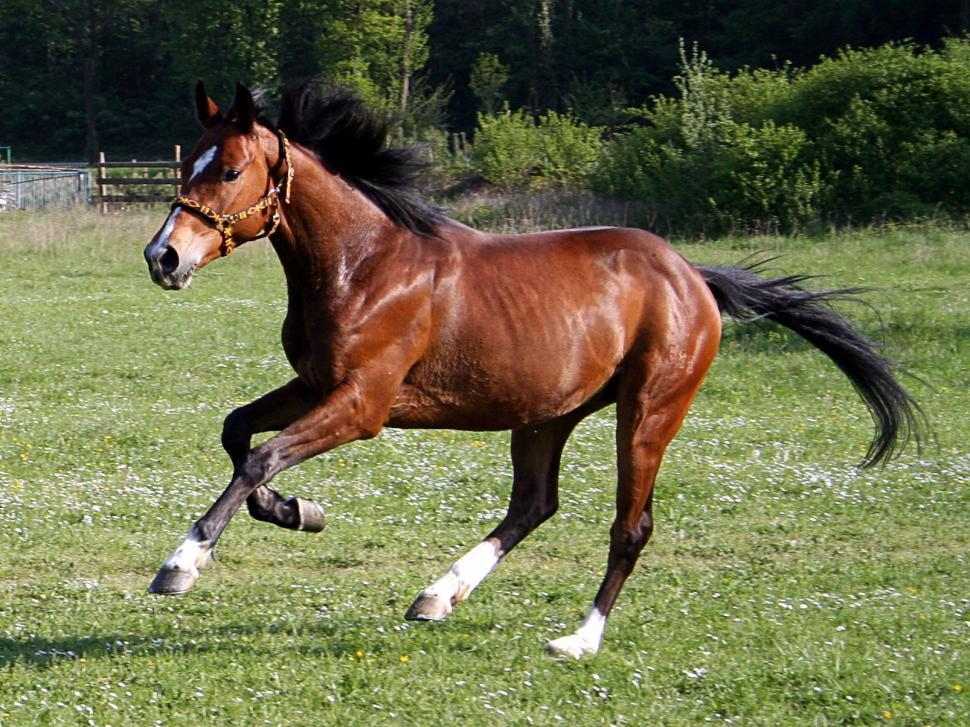 Download Free Stock Photo of Horse running