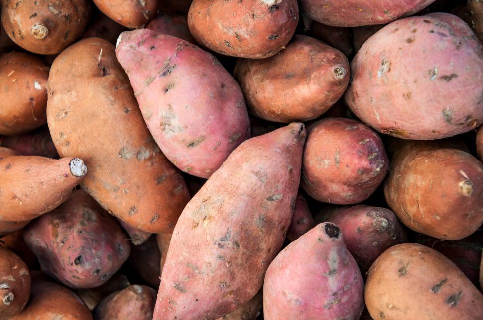 Download Free Stock Photo of organic sweet potatoes