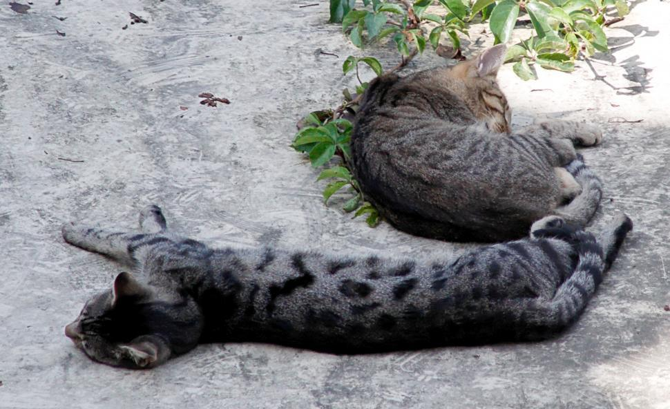 Download Free Stock HD Photo of Cats on a hot tin roof Online