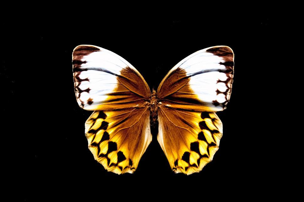 Download Free Stock Photo of Butterfly with open wings