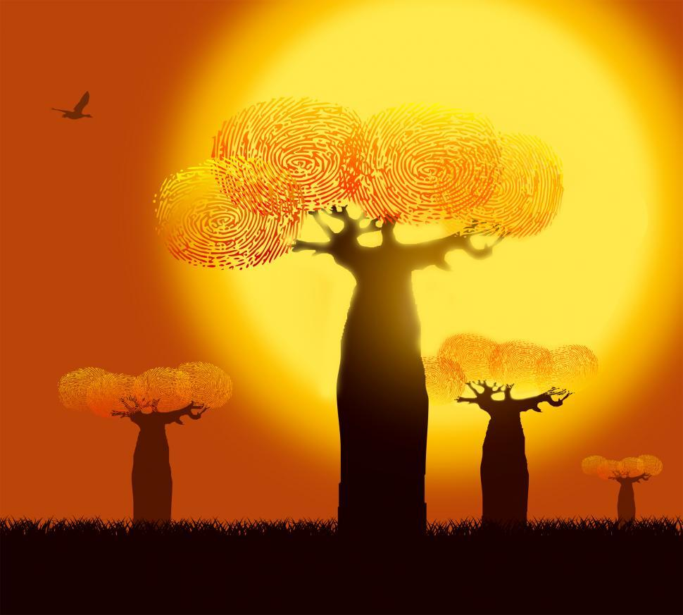 Download Free Stock Photo of Ecology Concept - Fingerprints on Baobab Trees - Warm Colors