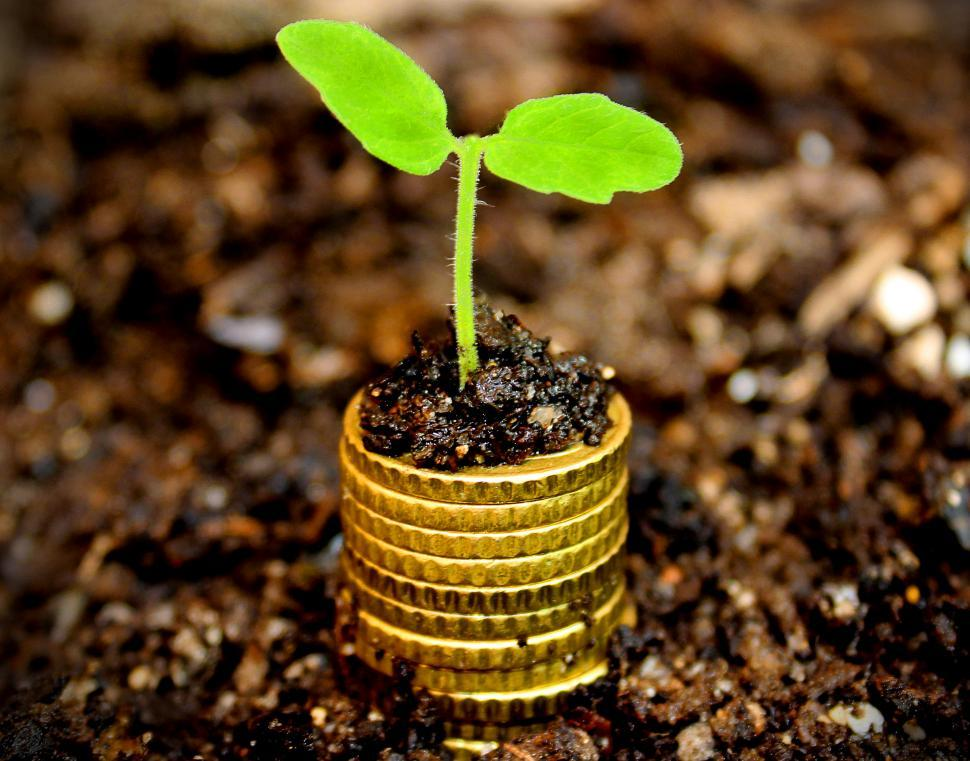 Download Free Stock Photo of Money growth concept - Coins in the soil with young plant