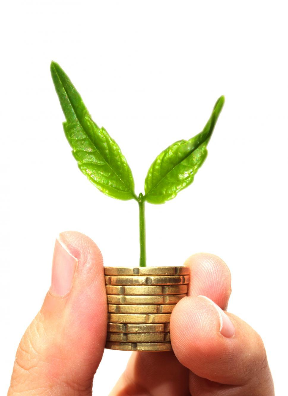 Download Free Stock Photo of Sprout on coins - Asset growth concept