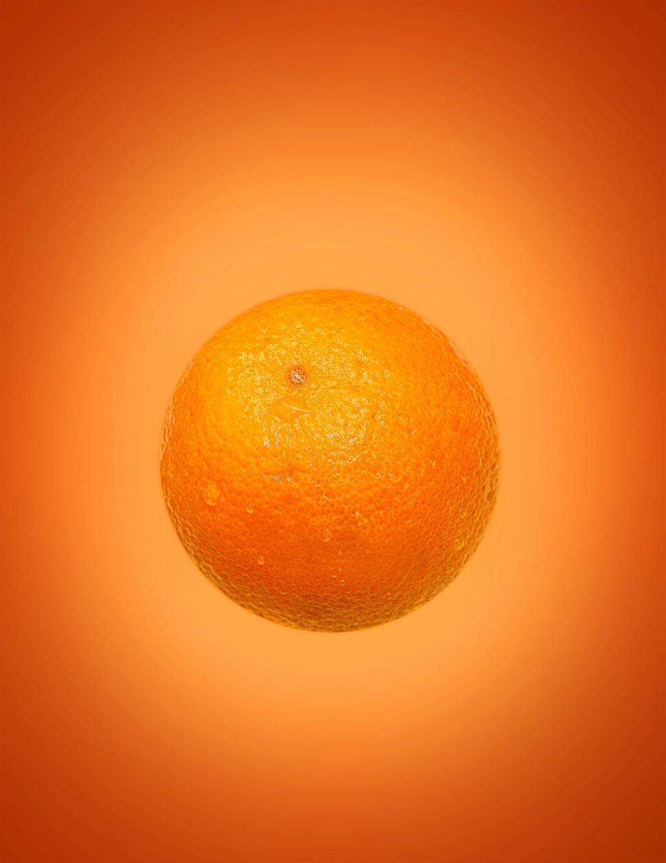 Download Free Stock Photo of Orange on Orange