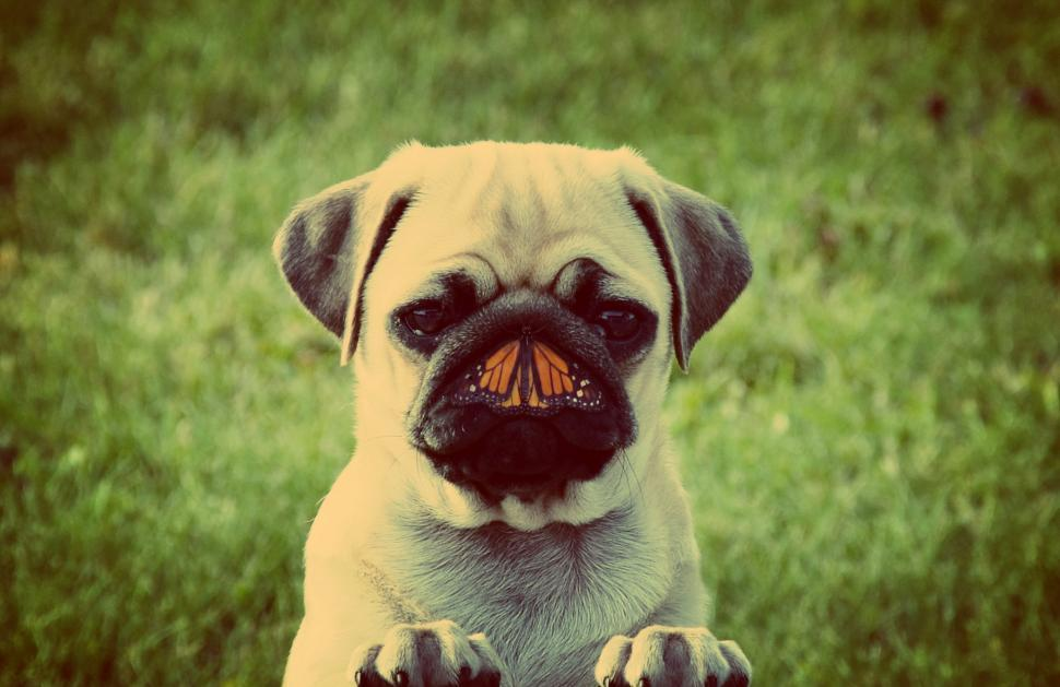 Download Free Stock Photo of Dog and butterfly - Unlikely friends concept retro toned