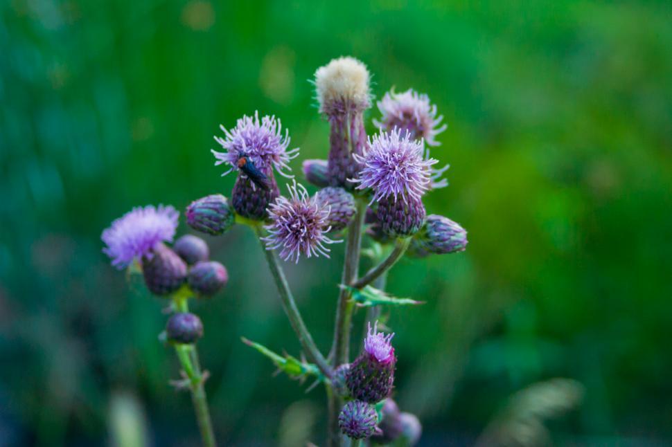 Download Free Stock HD Photo of Wild Purple Flowers Online