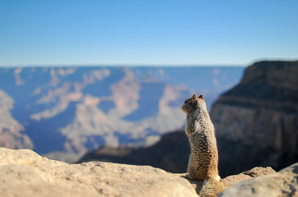 Download Free Stock Photo of Squirrel at the Grand Canyon
