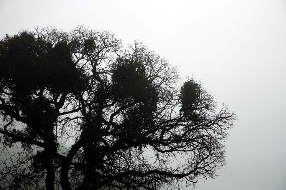 Download Free Stock HD Photo of Tree silhouette Online