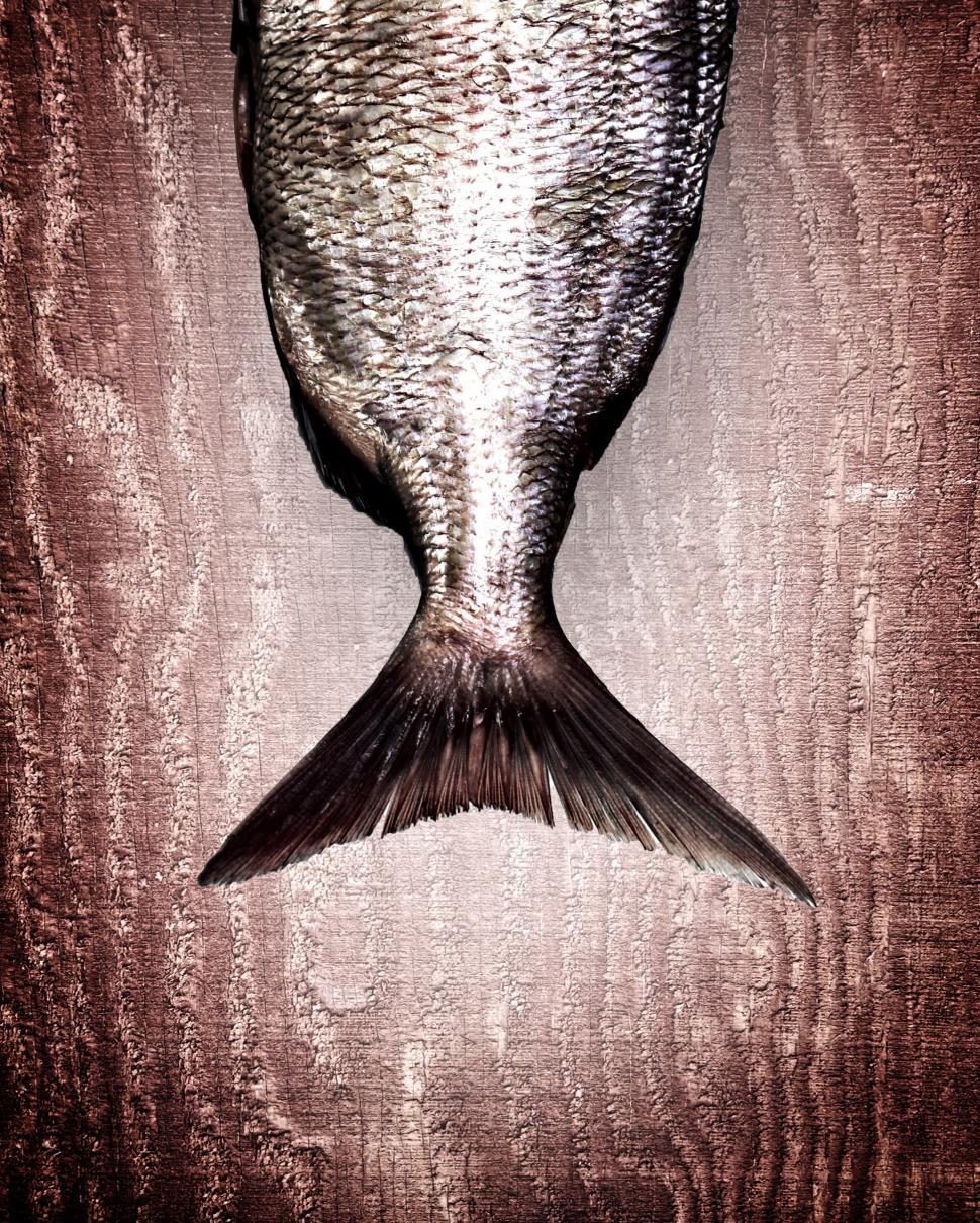 Download Free Stock HD Photo of Snapper fish tail on red wood background - Healthy eating Online