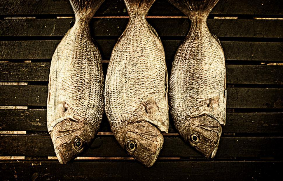 Download Free Stock Photo of Fish ready to smoke on wood background - Vintage image