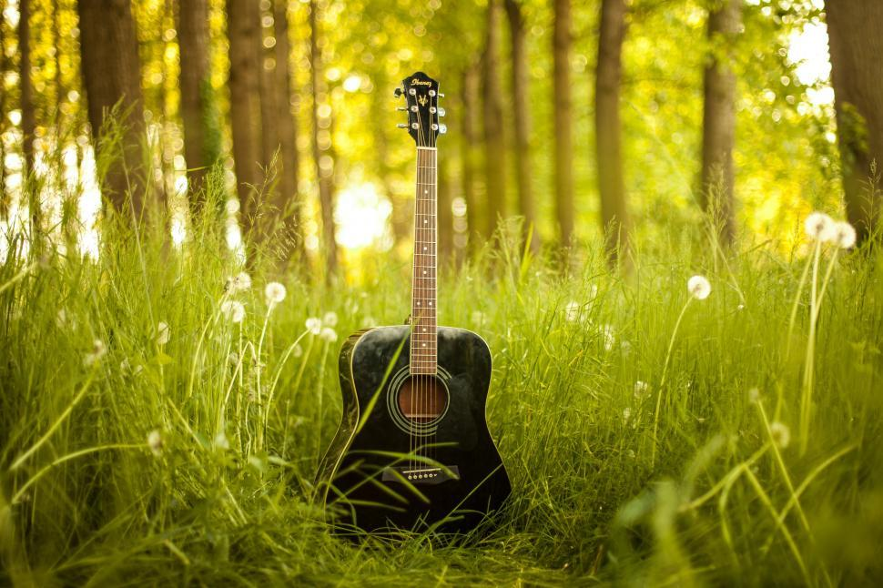 Download Free Stock Photo of Guitar and trees