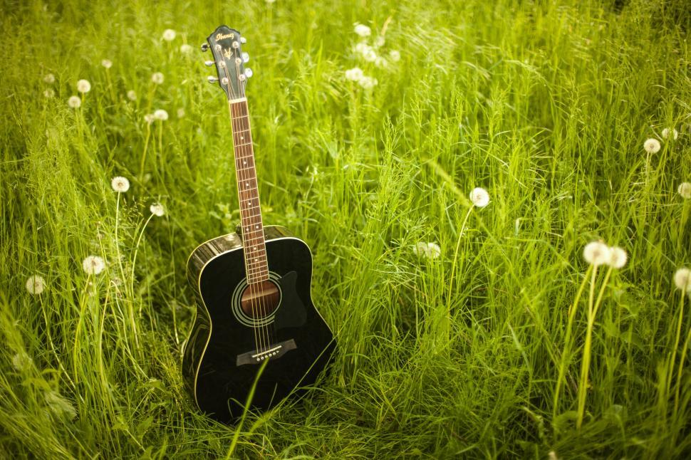 Download Free Stock Photo of Guitar and flowers