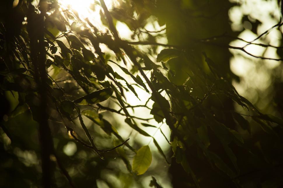 Download Free Stock Photo of Sun shining