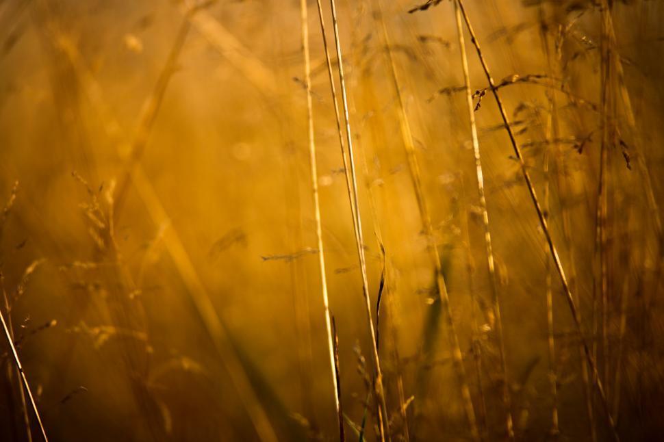 Download Free Stock HD Photo of  Golden field  Online
