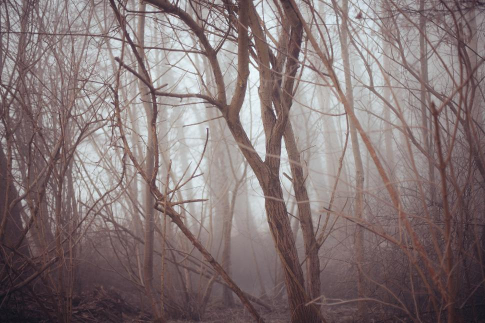 Download Free Stock Photo of  Tree Branches
