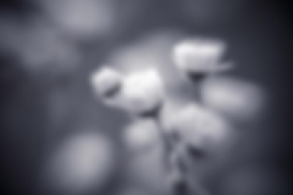 Download Free Stock HD Photo of Blurred flowers Online