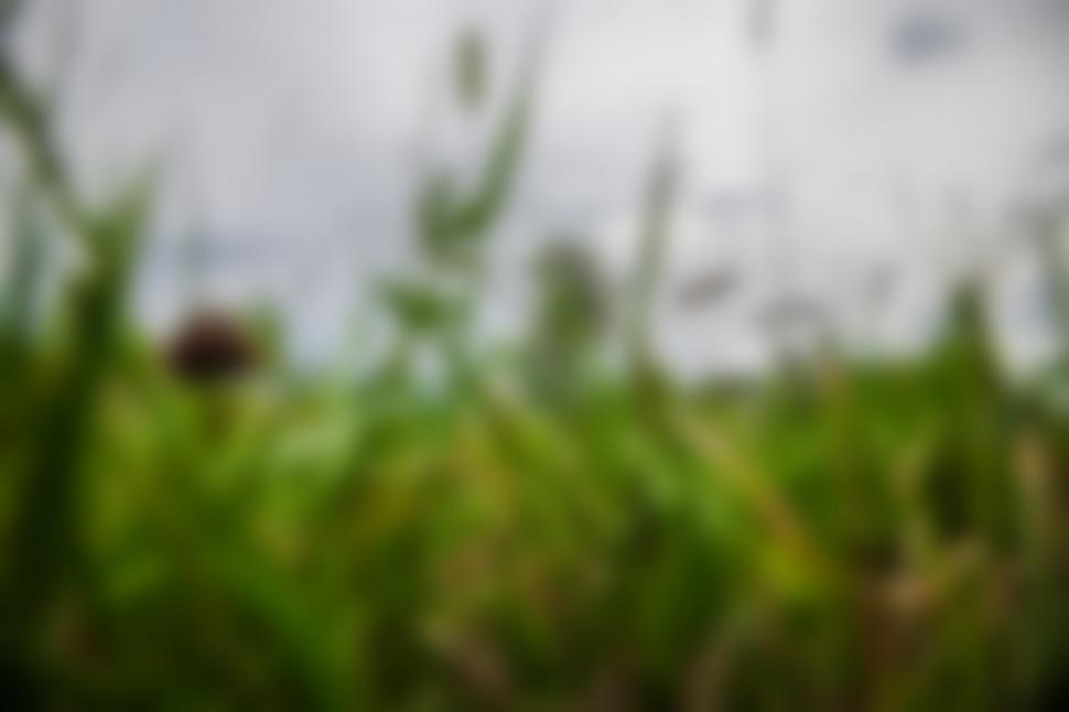 Download Free Stock HD Photo of Agricultural field Online
