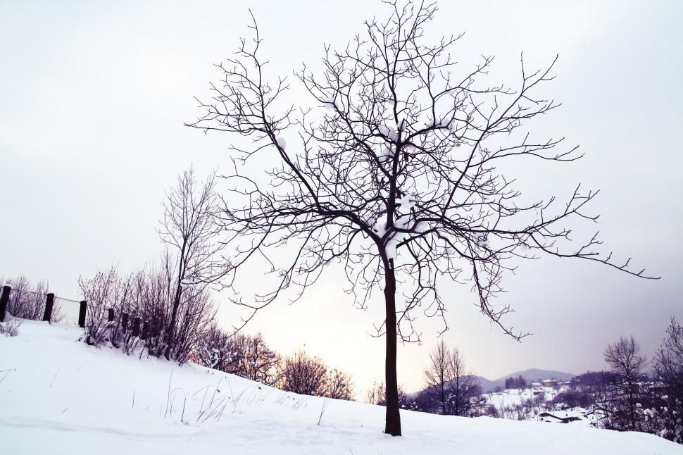 Download Free Stock HD Photo of Snowy tree Online