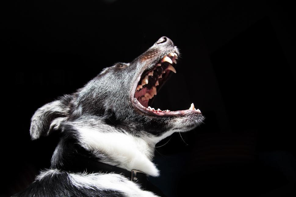 Download Free Stock Photo of Close-up portrait angry dog