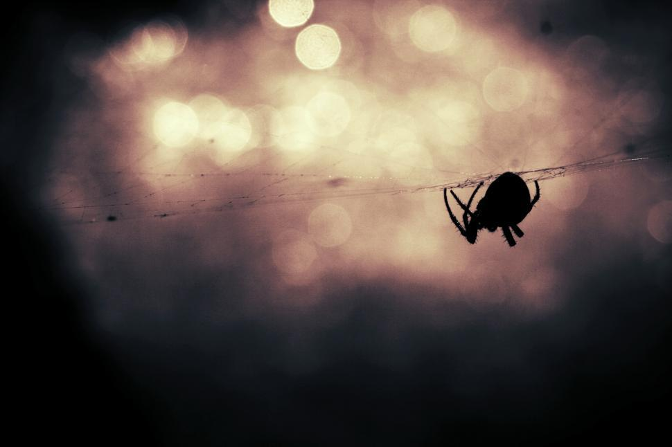 Download Free Stock HD Photo of Spider making its web Online