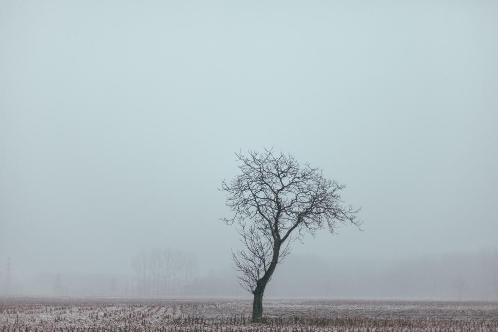 Download Free Stock Photo of A bare tree in the field