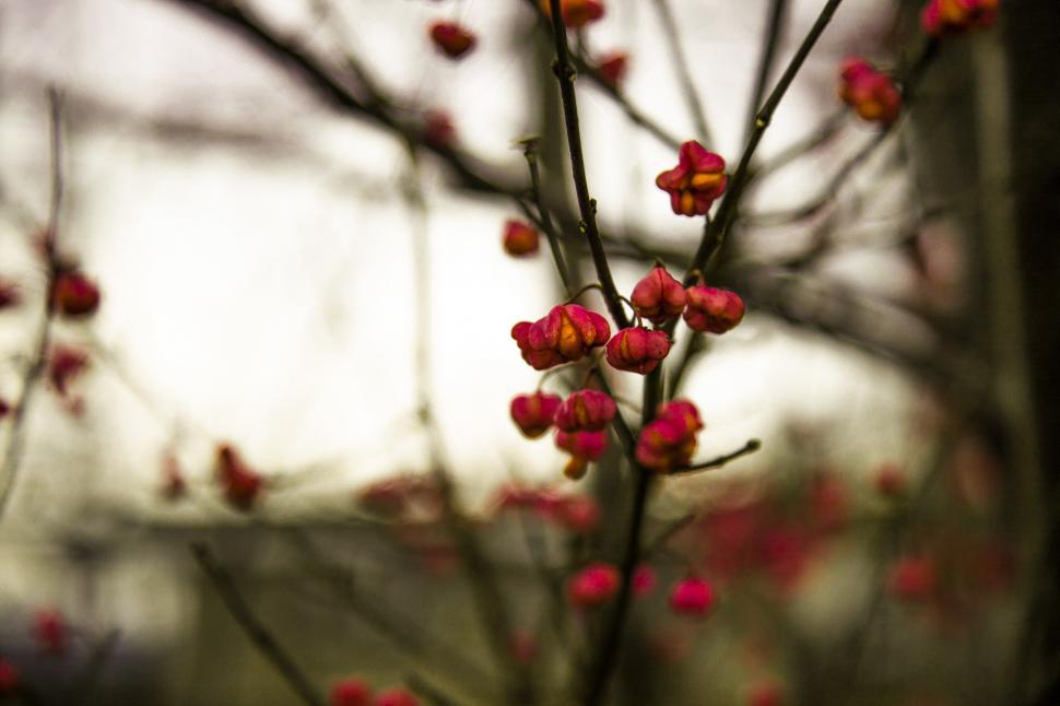 Download Free Stock HD Photo of Cherry tree Online