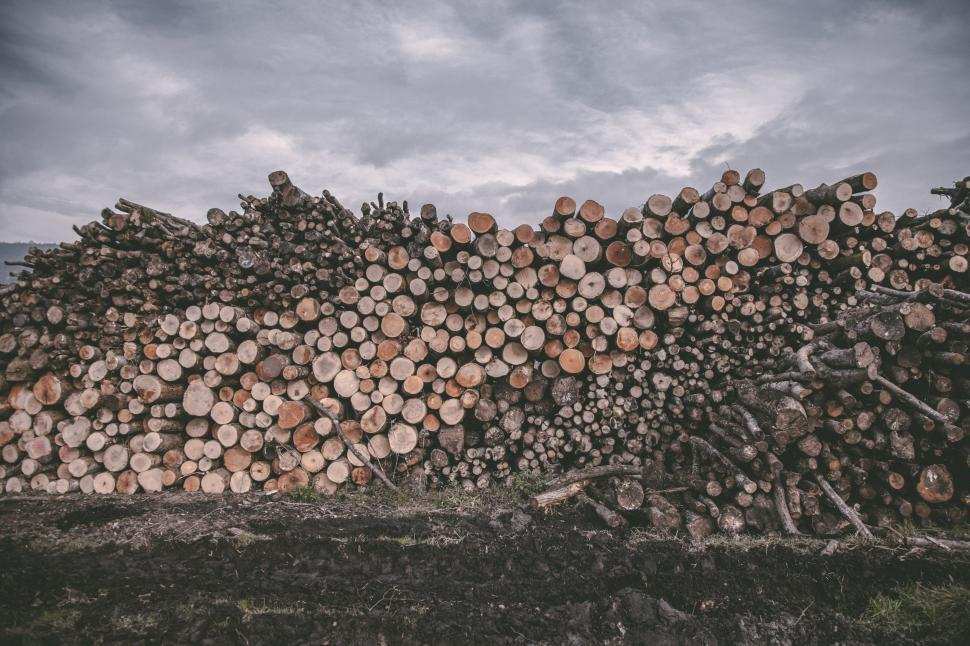 Download Free Stock Photo of Pile of wood logs