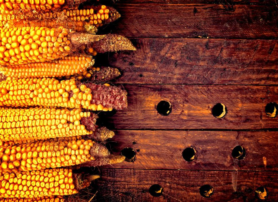 Download Free Stock Photo of Rustic corn cobs on wooden background