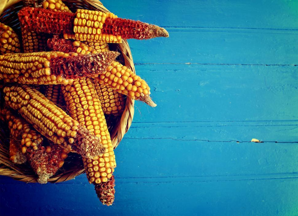 Download Free Stock HD Photo of Corn cobs in a basket on rustic blue wooden background Online