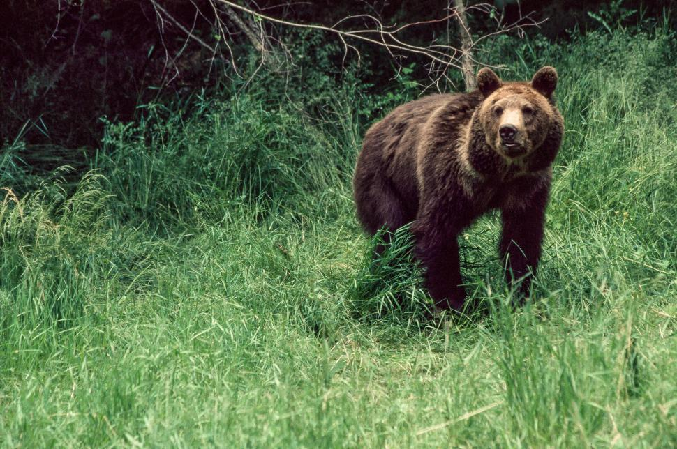 Download Free Stock HD Photo of Grizzly bear Online