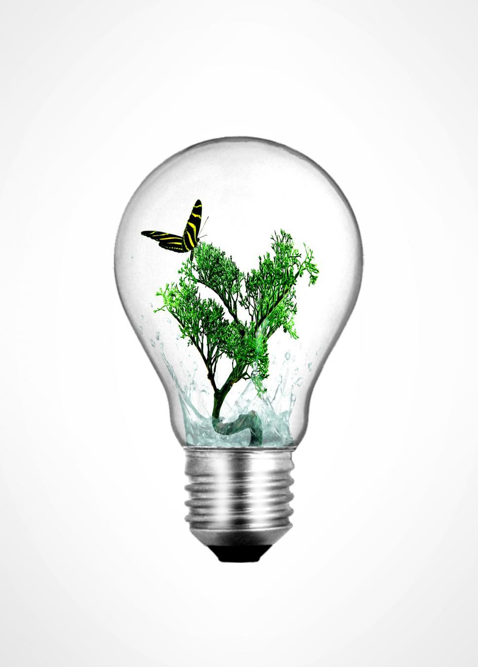 Download Free Stock HD Photo of Lightbulb with bonsai plant and butterfly inside - Ecology and e Online