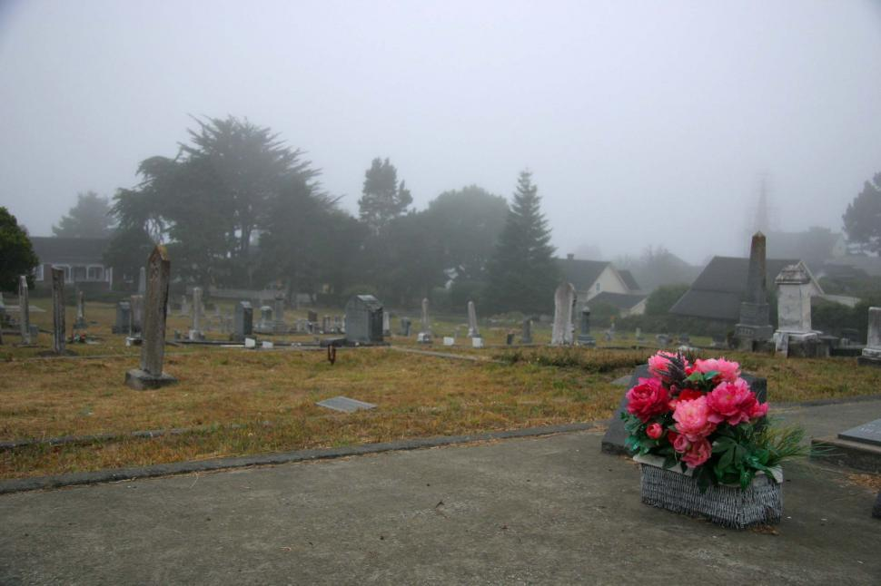 Download Free Stock HD Photo of Flowers in foggy cemetery Online