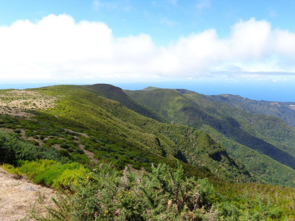 Download Free Stock Photo of Madeira nature