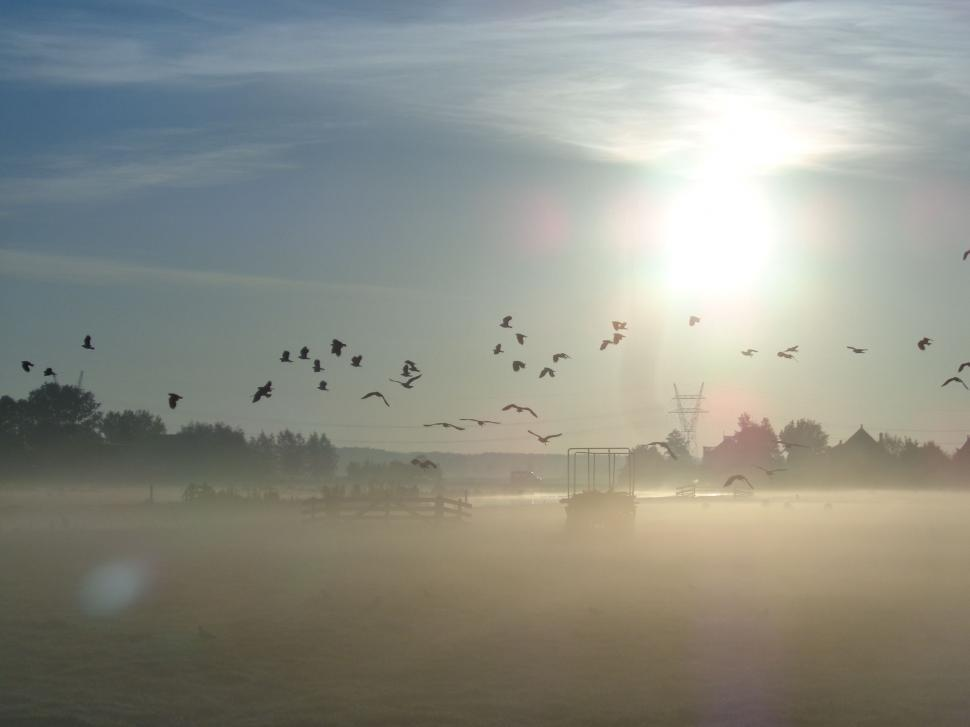 Download Free Stock HD Photo of Sunrise in the Netherlands with mist and birds Online