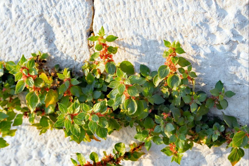 Download Free Stock HD Photo of Leafs on a stone Online