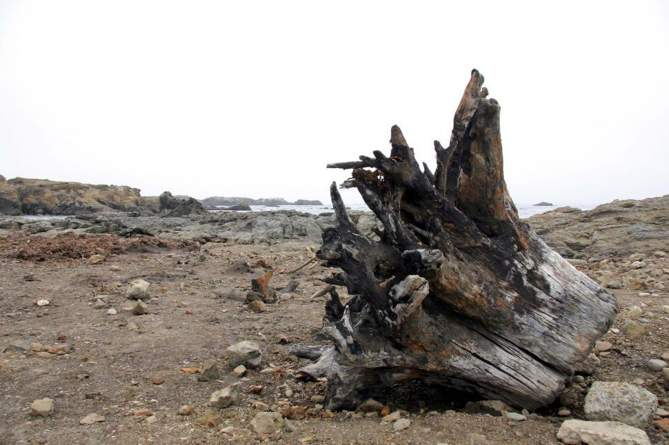 Download Free Stock Photo of Driftwood roots