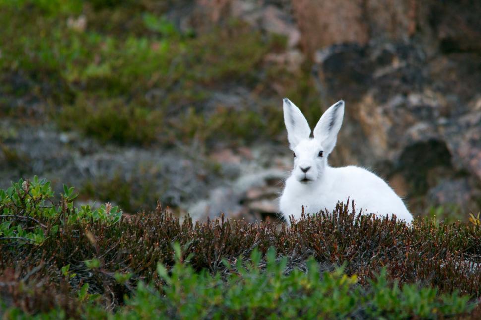 Download Free Stock Photo of hare mammal rabbit deer animal wallaby fur cute kangaroo