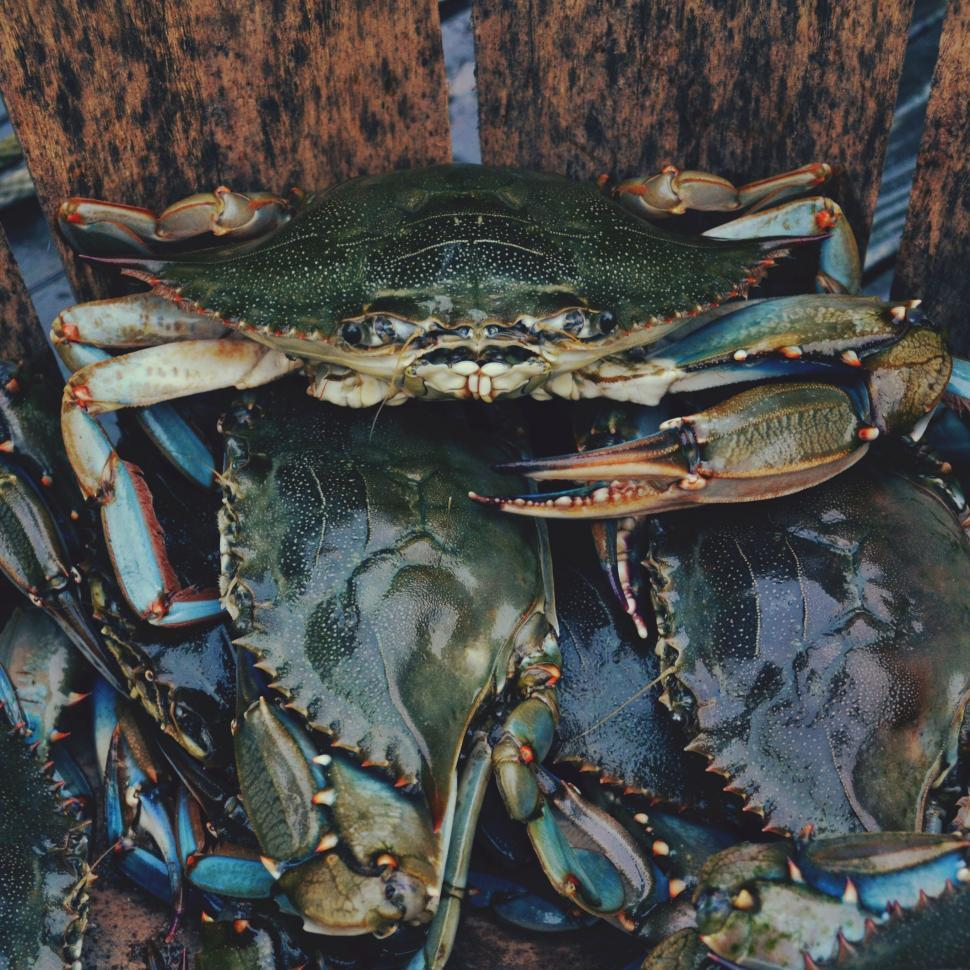 Download Free Stock Photo of crab crustacean dungeness crab rock crab spiny lobster arthropod lobster food king crab meal