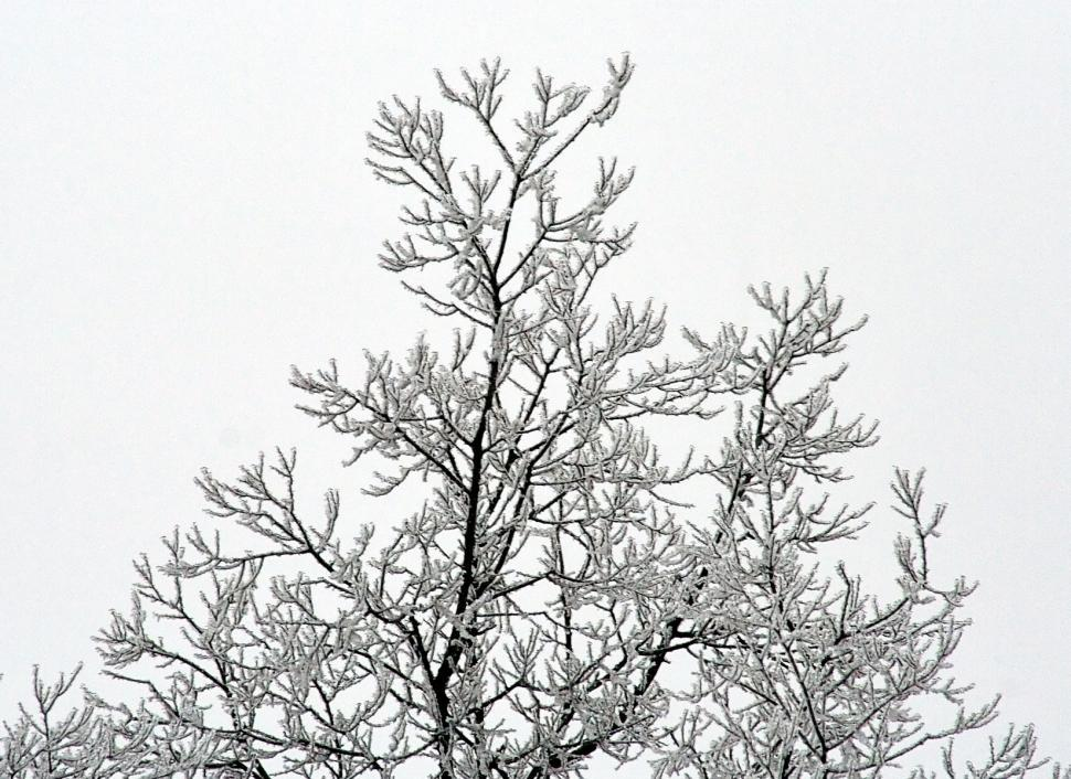 Download Free Stock HD Photo of Tree branches in ice Online