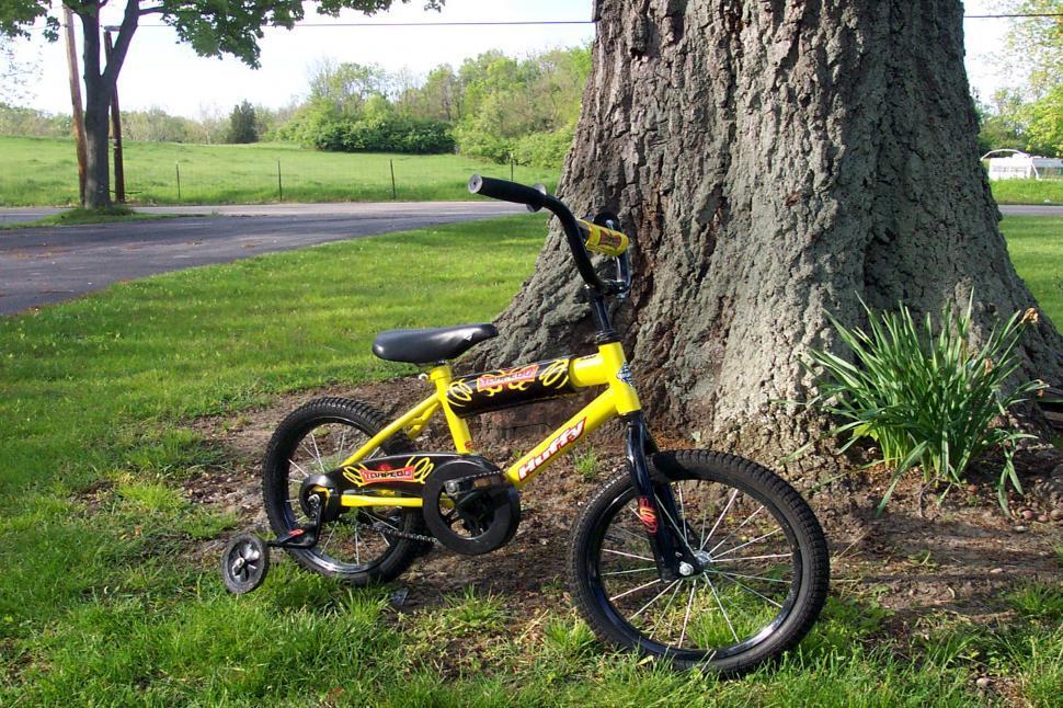 Download Free Stock HD Photo of Bike by the Oak Online