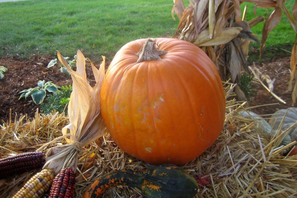 Download Free Stock HD Photo of Harvest Time Online