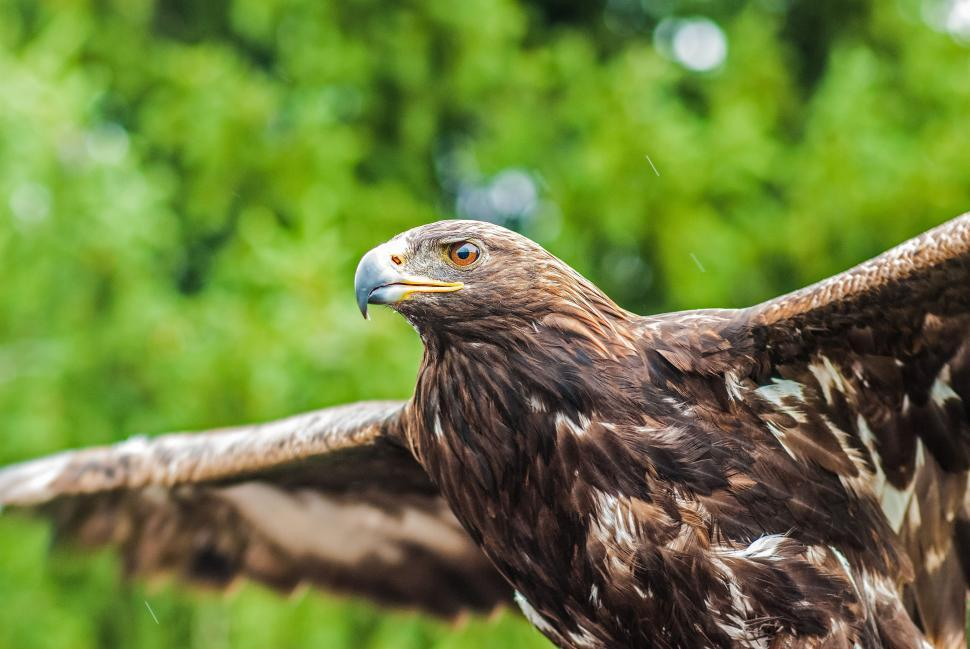 Download Free Stock Photo of bird house finch kite finch hawk animal feather