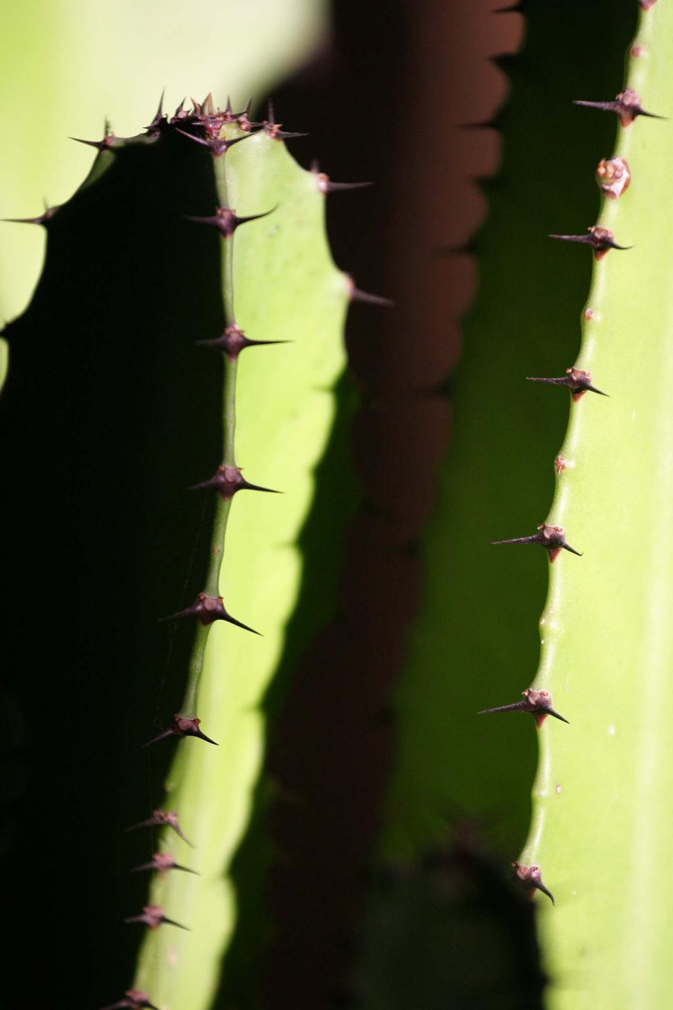Download Free Stock HD Photo of Cactus spines Online
