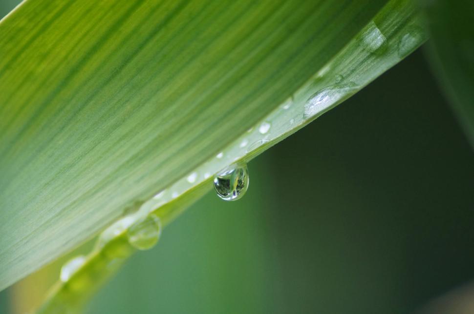 Download Free Stock Photo of  drop,  leaf,  rain,  dew,  water,  plant,  spring,  environment,  wet,  drops,  growth,  droplet,  fresh,  grass,  freshness,  raindrop,  summer,  liquid,  close,  flora