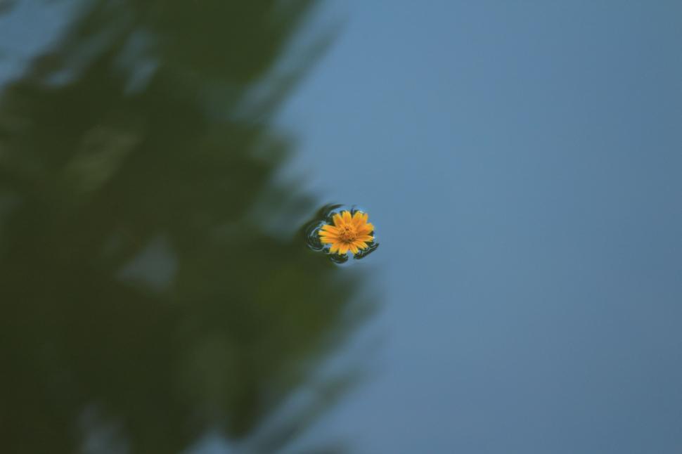 Download Free Stock Photo of flower plant ladybug spring garden beetle insect leaf flowers flora summer petal drop close