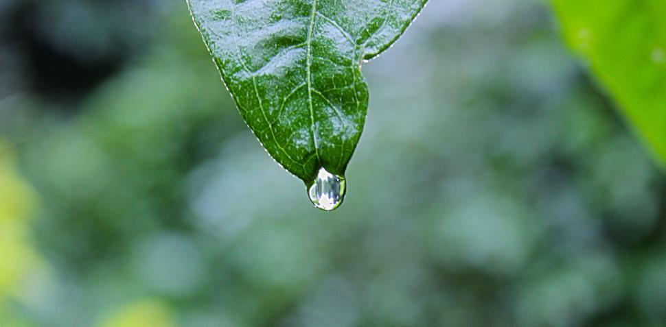 Download Free Stock Photo of drop leaf plant rain water dew spring drops wet environment growth fresh raindrop garden grass droplet liquid summer freshness natural bright close clean condensation closeup reflection transparent morning flora