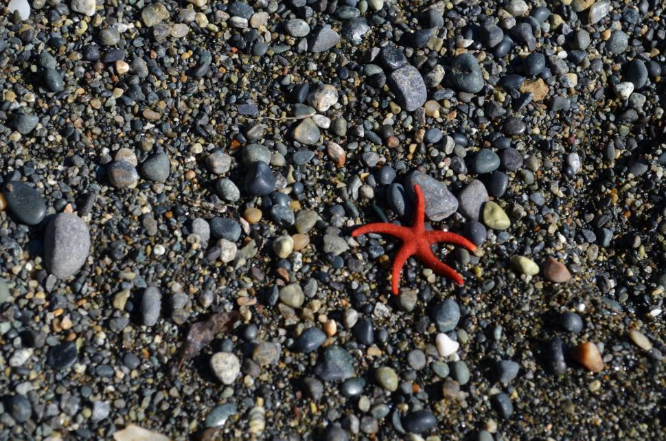 Download Free Stock Photo of crab fiddler crab crustacean rock crab arthropod