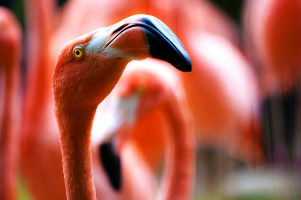 Download Free Stock Photo of wading bird flamingo aquatic bird bird anemone fish damselfish